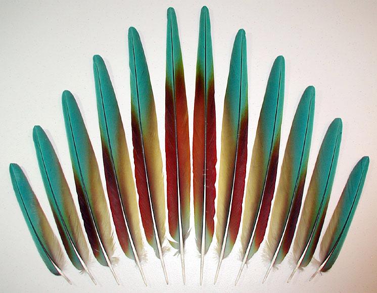feathers fancy fea...